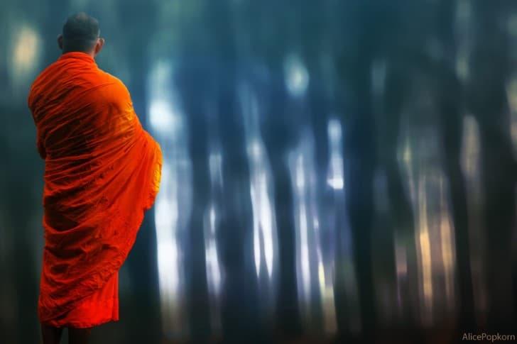 monje budista en el bosque