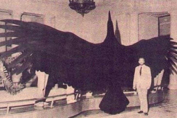 pajaro gigante