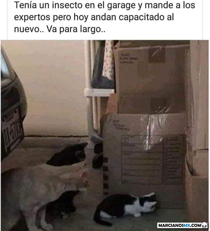 Marcianadas 369 290219001209 (108)