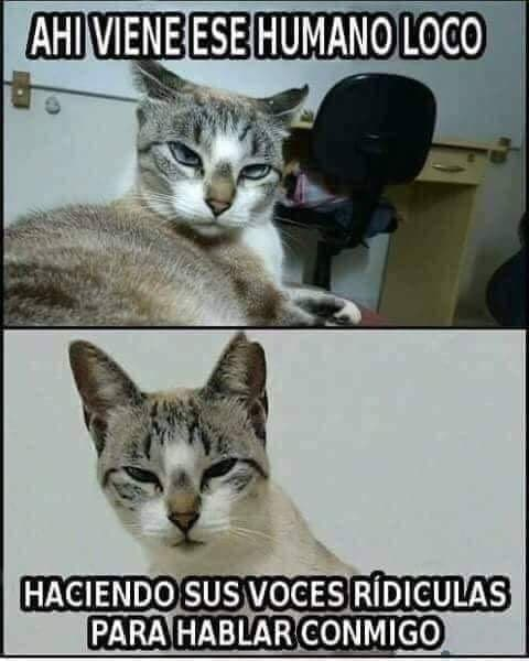 Marcianadas 369 290219001209 (23)