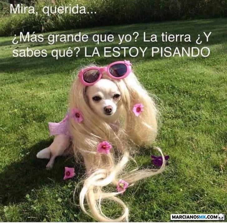Marcianadas 369 290219001209 (72)