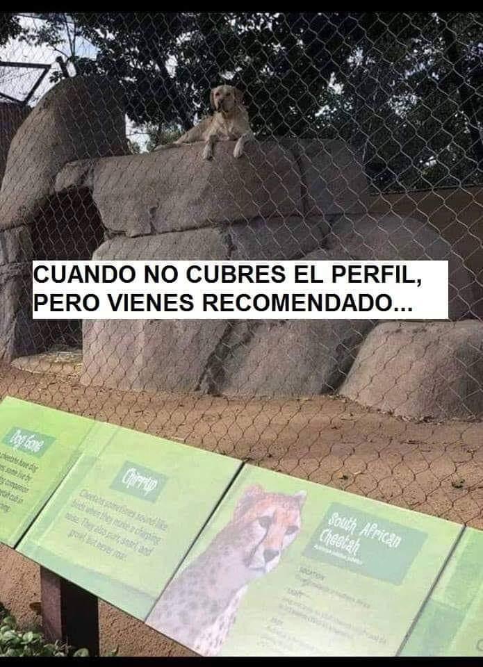 Marcianadas 370 080319001003 (180)