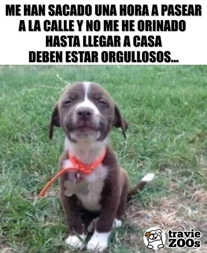 Marcianadas 370 080319001003 (199)