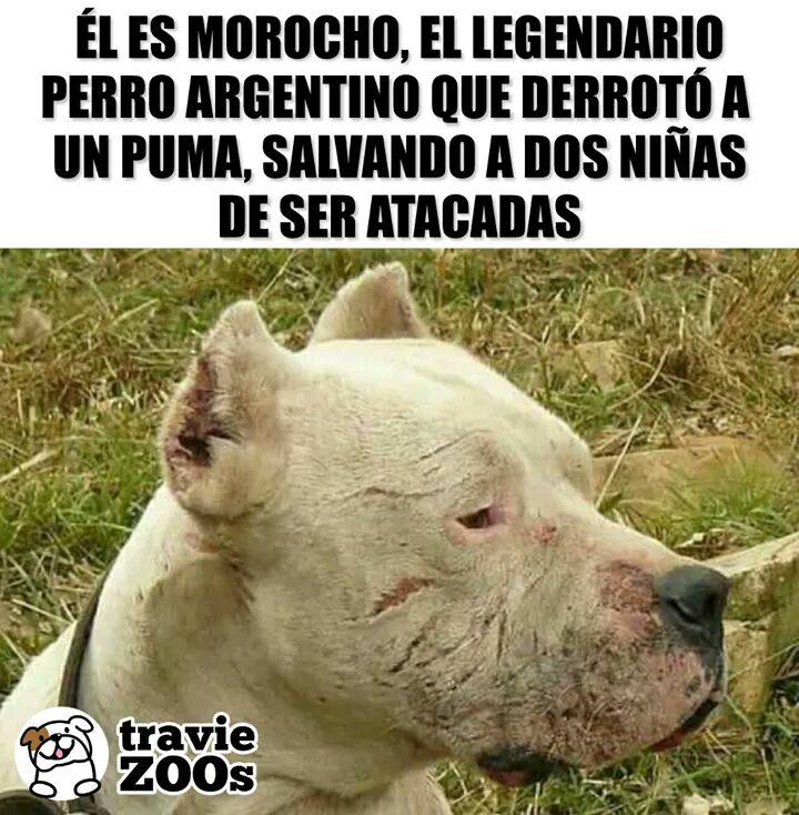 Marcianadas 370 080319001003 (209)