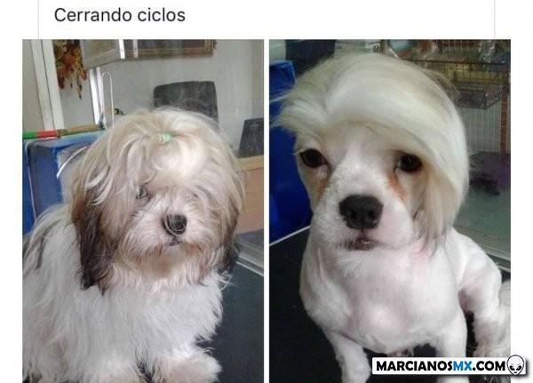 Marcianadas 370 080319001003 (233)