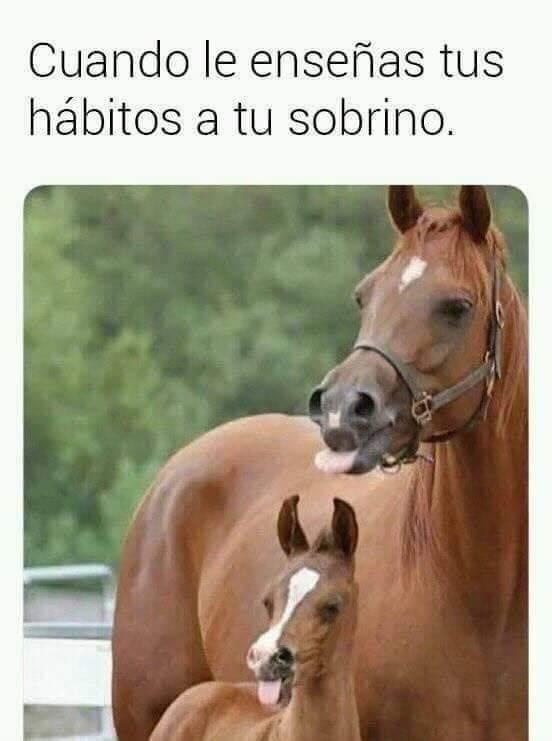 Marcianadas 372 220319001234 (114)