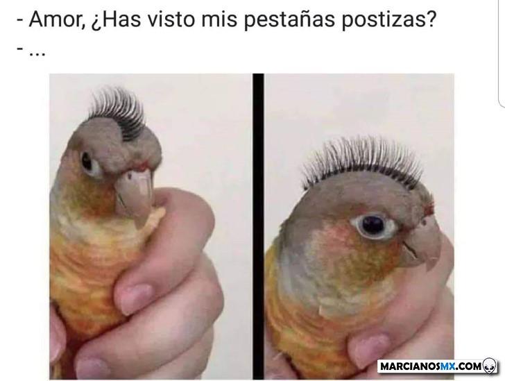 Marcianadas 373 29032019001515 (272)