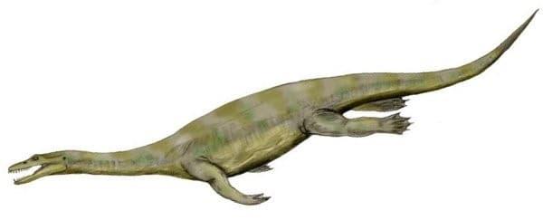Nothosauroidea