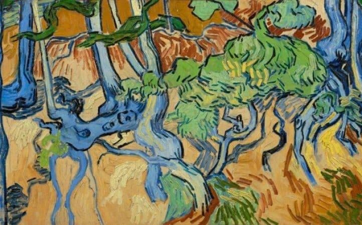 Raíces de árboles