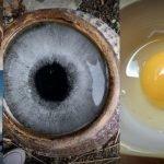 25 imágenes de cosas que no son lo que parecen