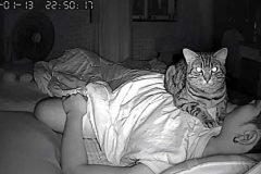gatos actividades nocturnas (10)