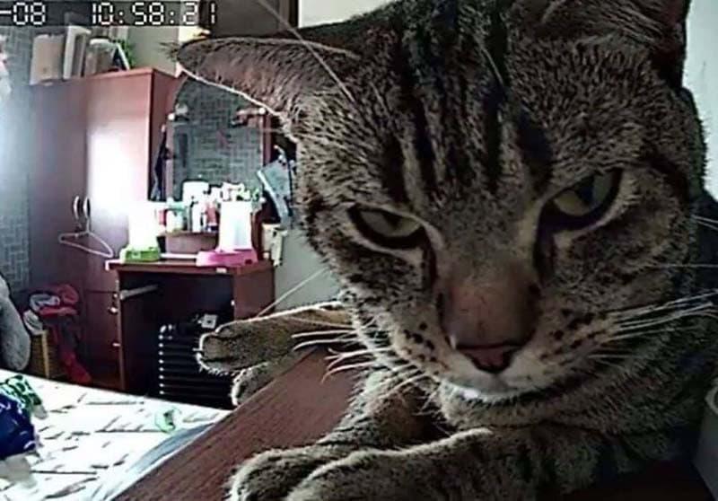 gatos actividades nocturnas (12)