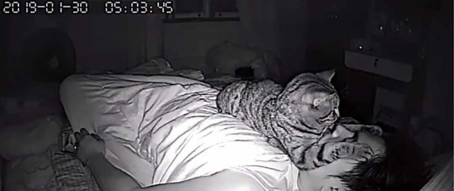 gatos actividades nocturnas (6)