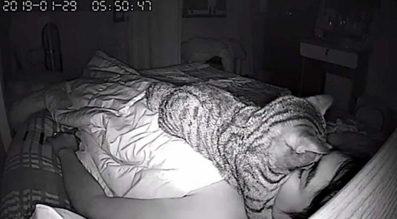 gatos actividades nocturnas (7)