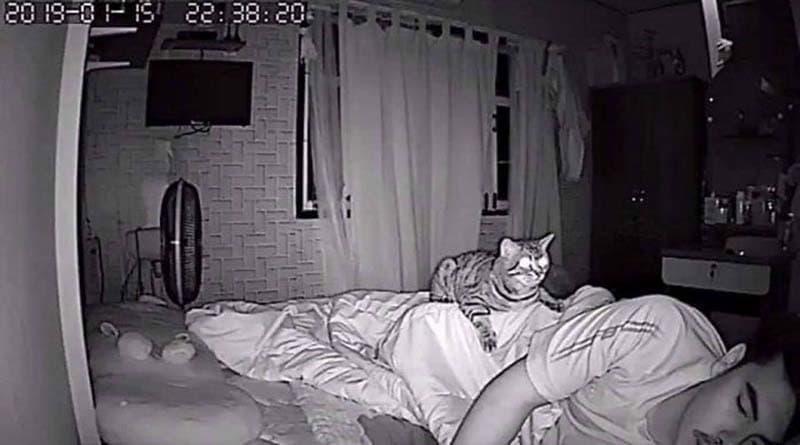gatos actividades nocturnas (9)