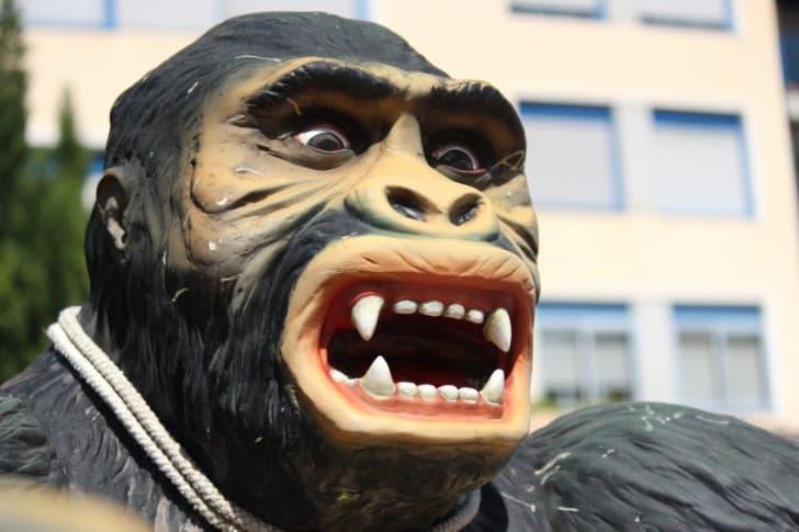 gorila sorprendido