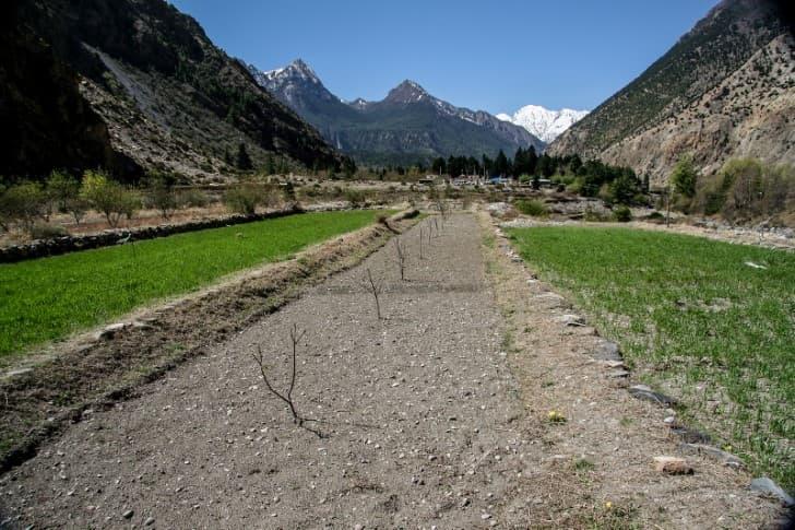 plantacion de manzanas en el tibet