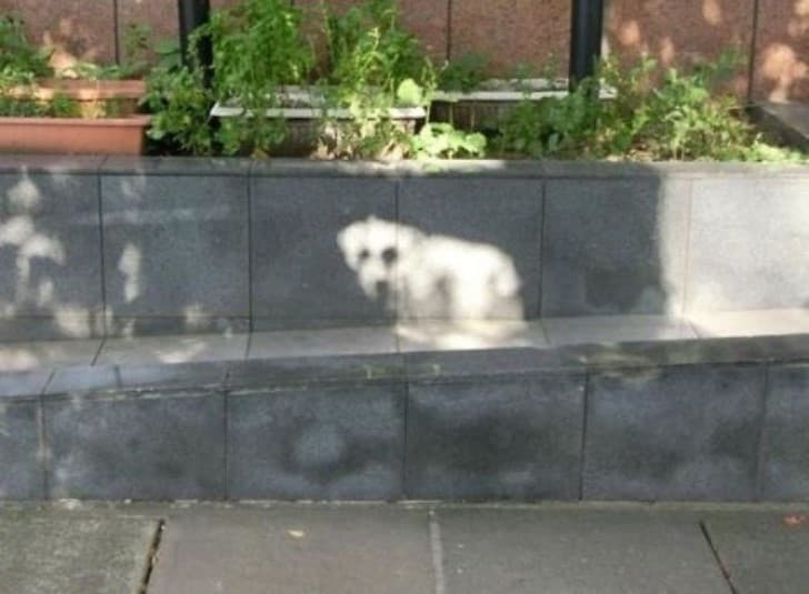 silueta perro sol
