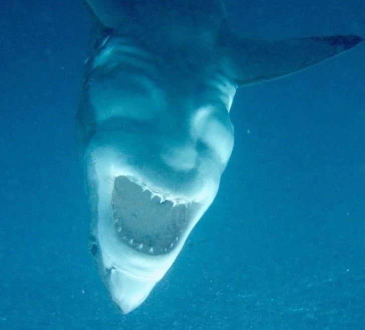tiburon rostro diabolico