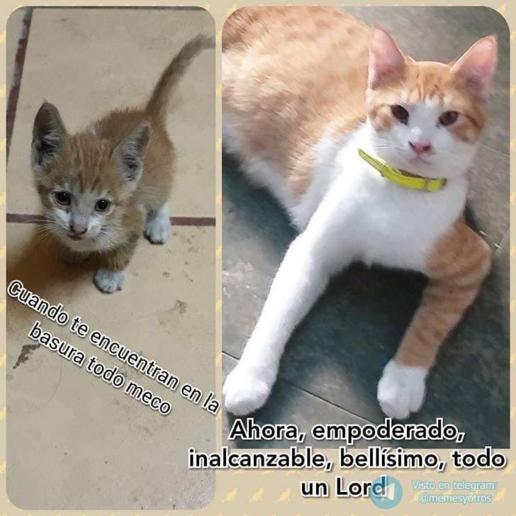 Marcianadas 374 050419001333 (192)