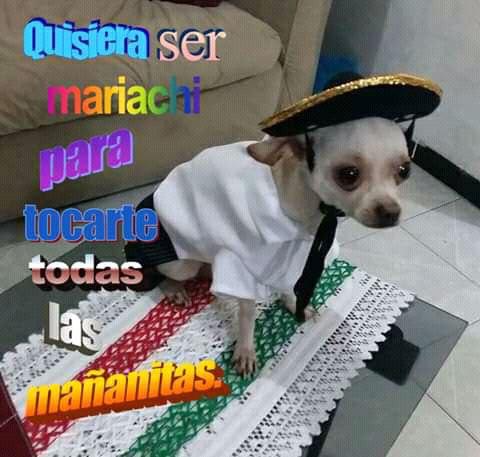 Marcianadas 375 1200419001153 (101)