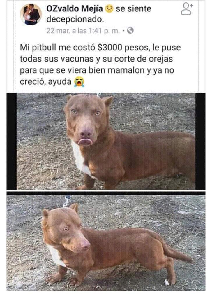 Marcianadas 375 1200419001153 (26)
