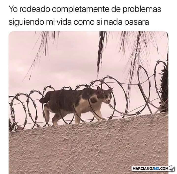 Marcianadas 375 1200419001153 (280)