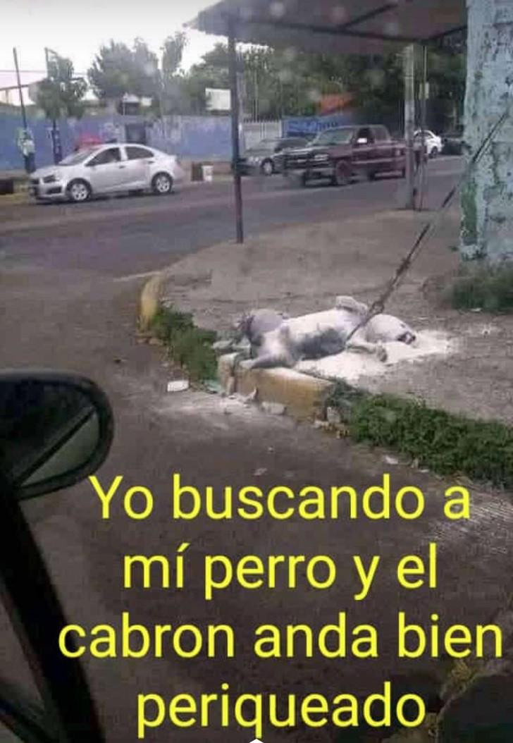 Marcianadas 376 190419001345 (349)