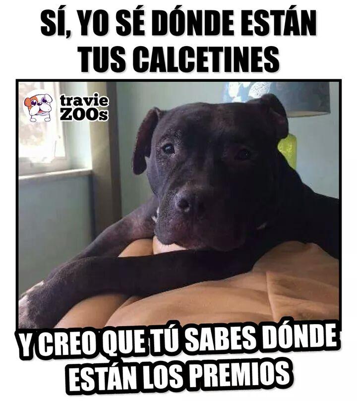 Marcianadas 377 260419001400 (120)