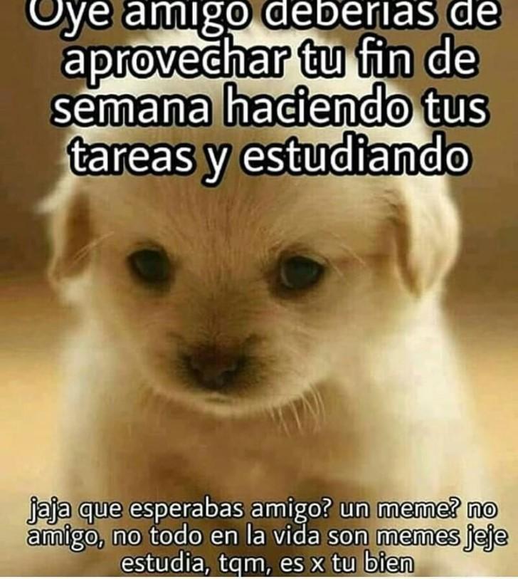 Marcianadas 377 260419001400 (338)