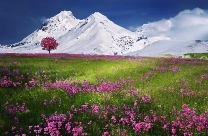 campo con flores y nieve