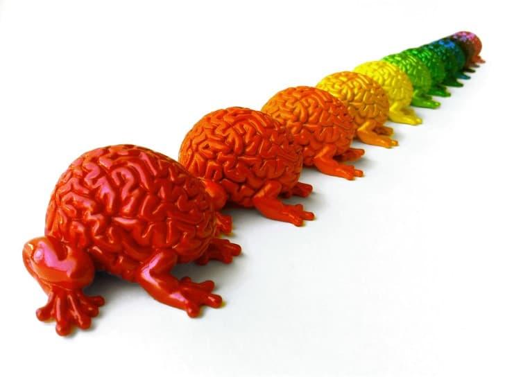 cerebros de muchos colores