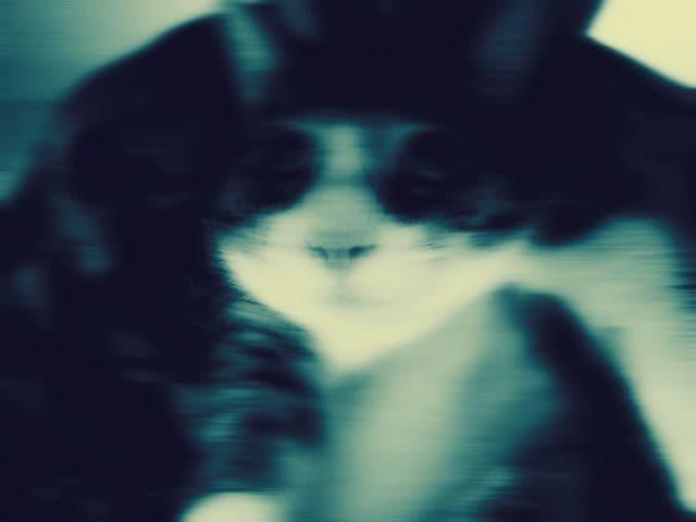 gato asustador