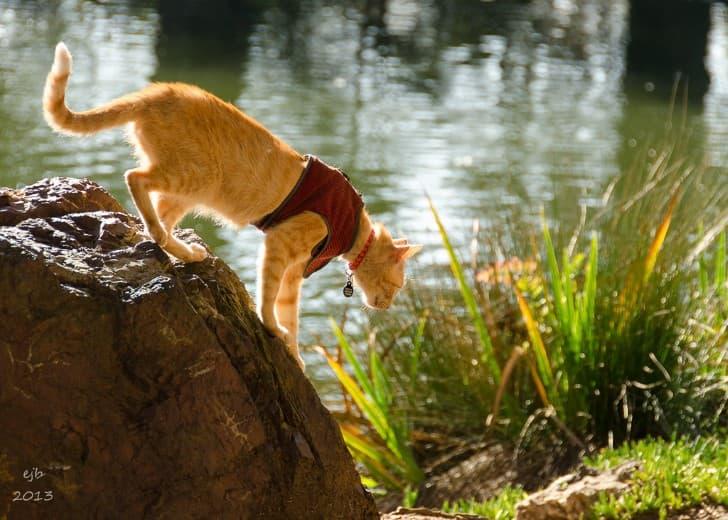 gato explorando