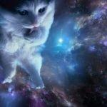 gato viajando por el espacio tiempo