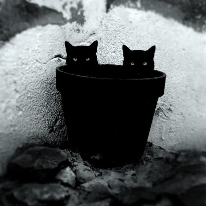 gatos gemelos