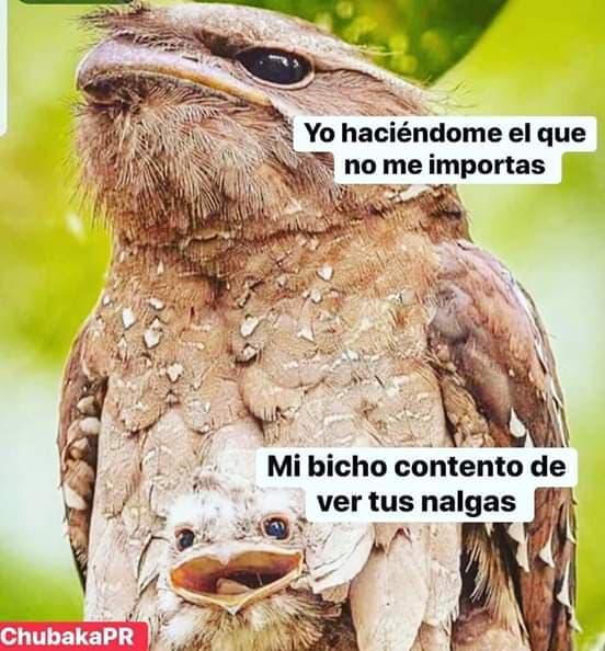 Marcianadas 379 100519001505 (38)