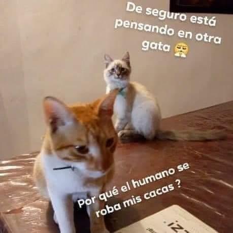 Marcianadas 380 170519001155 (41)