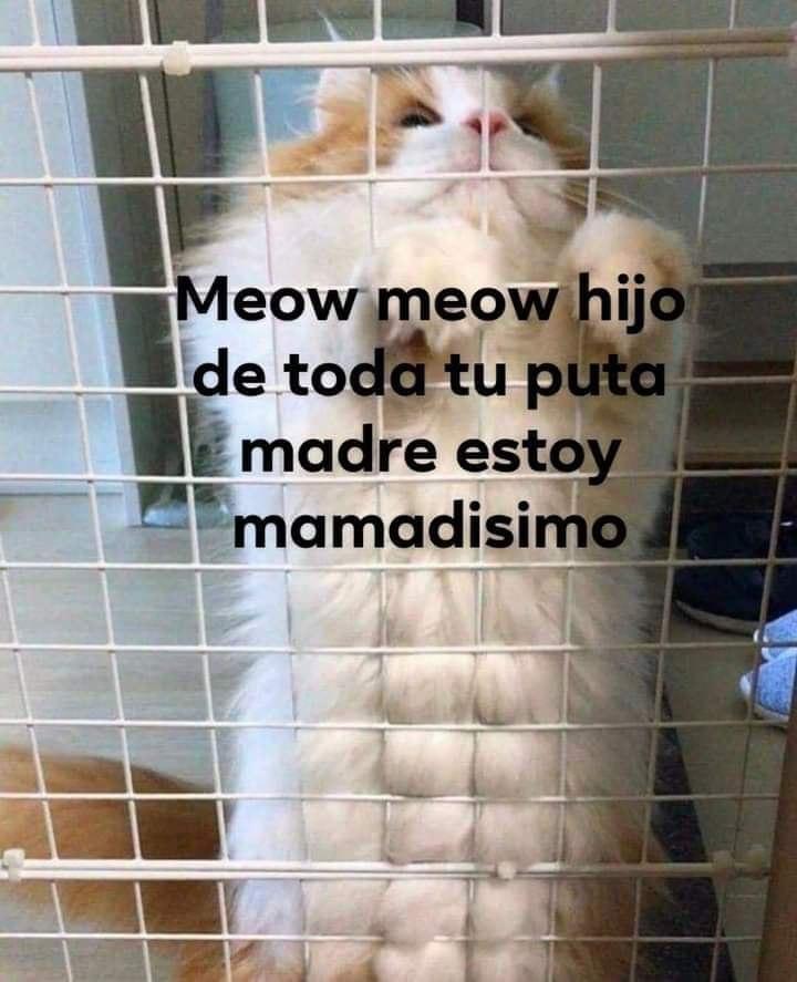Marcianadas 382 310519001838 (163)