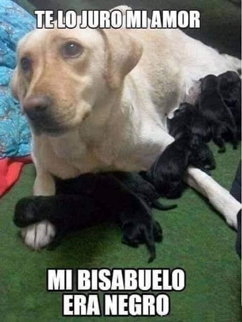 Marcianadas 382 310519001838 (33)