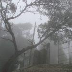 ambiente lleno de niebla