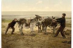 niños empujando burros