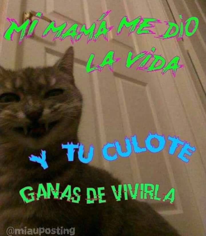 Marcianadas 386 2806201924578652145 (276)