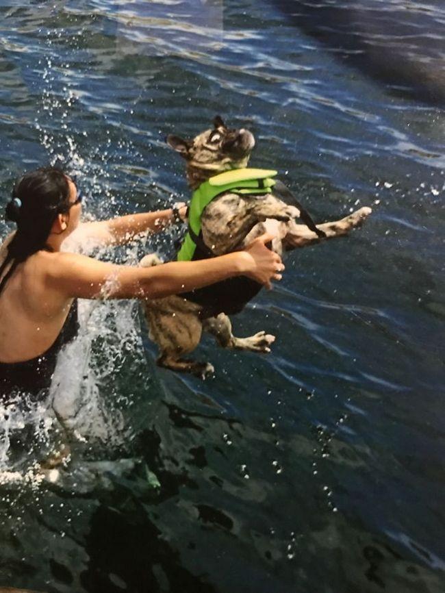 fotos mascotas animales feos (1)