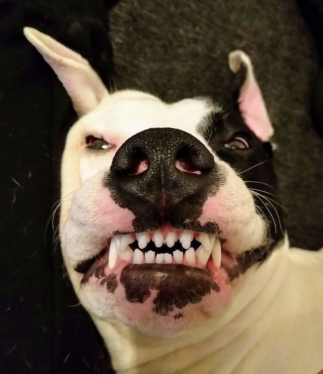 fotos mascotas animales feos (10)