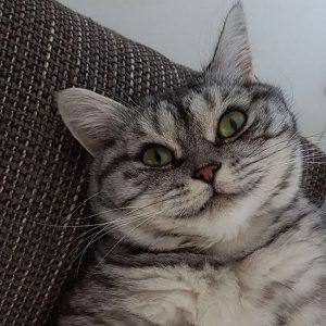 fotos mascotas animales feos (20)