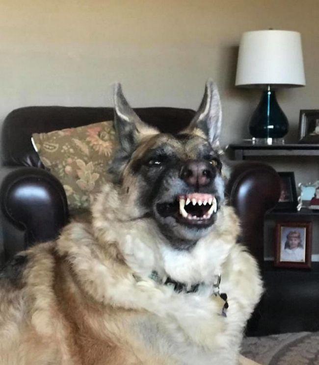 fotos mascotas animales feos (3)