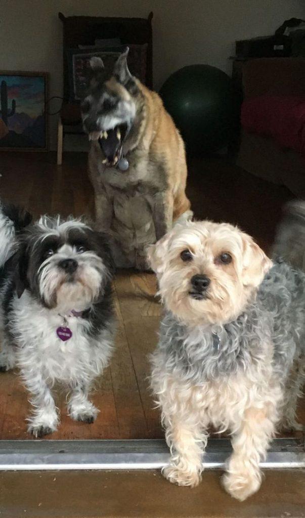 fotos mascotas animales feos (9)