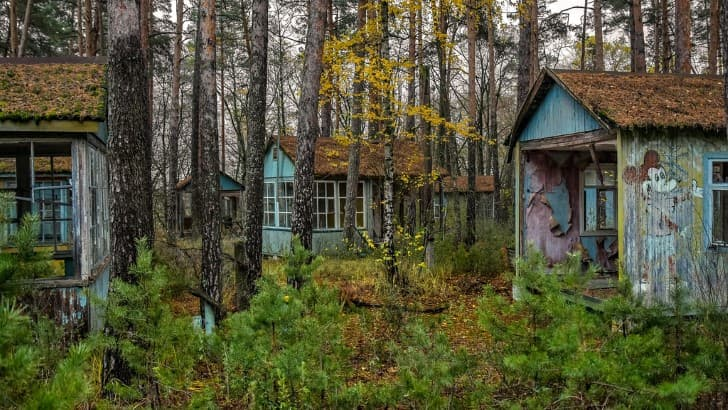 naturaleza en chernobil