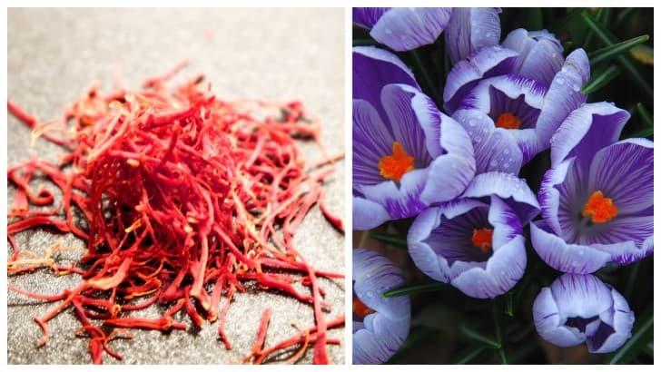 Azafran condimento y flor de donde se extrae